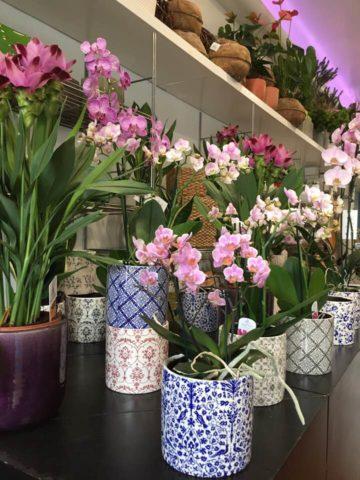 Negozio di fiori e oggettistica Castel d'Ario